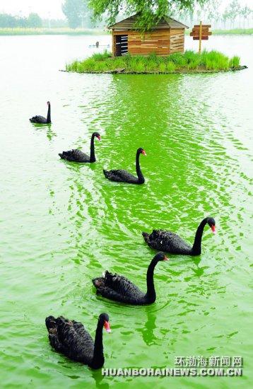 唐山南湖又添新景——天鹅湖(图)
