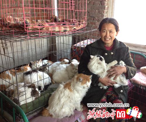 唐山退休教师12年收留流浪动物