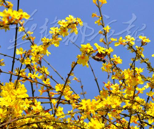 唐山春天到来绿草发芽鲜花吐蕊(组图)