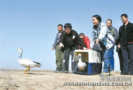 """图为""""跟着大雁去迁徙""""活动志愿者和乐亭野生动物保"""