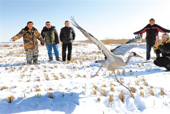 图为志愿者放飞经救助康复的国家二级保护动物灰鹤。 兆阳 摄 唐山市沿海滩涂湿地是中国生物多样性保护与绿色发展基金会命名的中华水鸟保护地,是冬候鸟的重要栖息地。春节期间,乐亭大清河盐场野生动物救助站的志愿者已做好安排,加强巡护,严防偷猎盗猎,救护伤病珍禽。